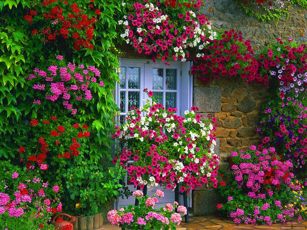 Aliste su jard n para dar vida y color a la primavera for Jardines en primavera fotos