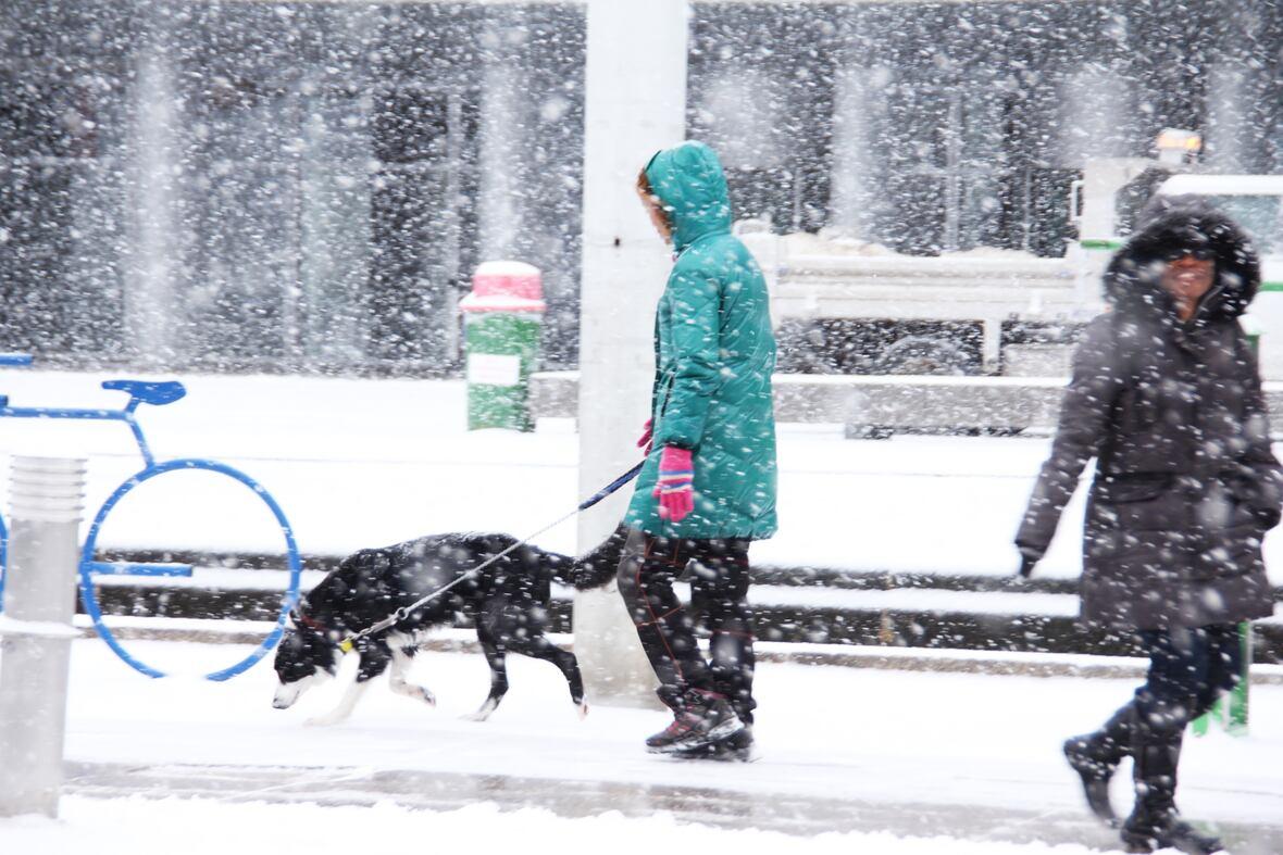 Con una fuerte nevada, se le adelantó el invierno a Toronto y sus alrededores